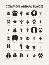 Plakat  Common animal tracks - Iris Luckhaus