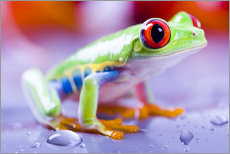 Gallery print  colorful frog
