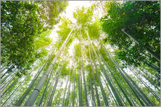 Gallery print  Light falls through the bamboo forest