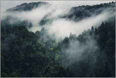 Gallery print  Mystic forests in fog - Oliver Henze