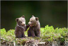 Gallery print  Two young brown bears