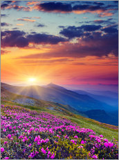 Gallery print  Rhododendron blossom in the Carpathians