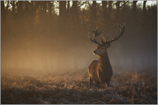 Naklejka na ścianę  Stag in autumn sunrise - Alex Saberi