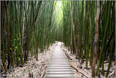 Naklejka na ścianę  Trail through the bamboo forest - Pacific Stock
