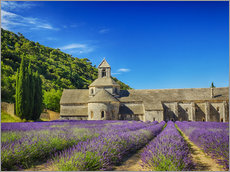 Gallery print  Monastery with lavender field - Terry Eggers