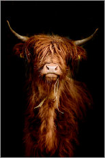 Obraz na drewnie  Scottish highland cattle - Art Couture