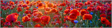 Gallery print  Poppy field - Art Couture