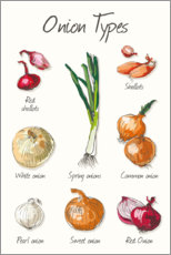 Plakat The onion types