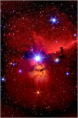 Plakat  Horsehead Nebula in the constellation Orion - MonarchC