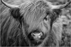 Obraz na drewnie  Highlander - Scottish Highland Cattle black and white - Martina Cross
