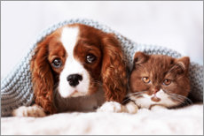 Plakat Friends - puppy and kitten
