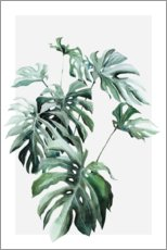Plakat Monstera plant