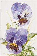 Plakat Pansy watercolor