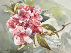 Plakat Rhododendron watercolor