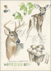 Obraz na drewnie  Whitetailed deer & forest mushrooms - Jennifer Parker