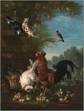 Plakat Domestic cock, hens, and chicks in a park