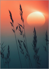 Plakat Sunrise over grasses