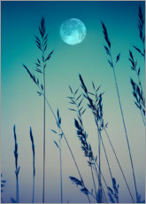 Obraz na płótnie  Full moon over the grasses