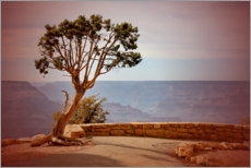 Plakat  Tree over the Grand Canyon - fotoping