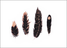 Plakat Ink and rose gold feathers