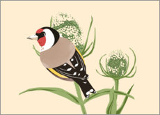 Gallery print  Goldfinch - Sandy Lohß