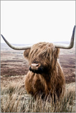 Obraz na drewnie  Brown highland cattle - Art Couture