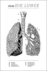 Gallery print  Lungs Vintage Chart (German) - Wunderkammer Collection