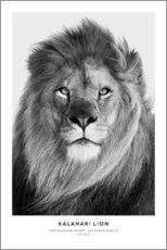 Obraz na drewnie  Kalahari Lion - Art Couture