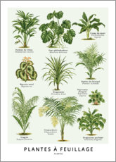 Gallery print  Foliage plants (french) - Wunderkammer Collection