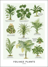 Gallery print  Foliage plants - Wunderkammer Collection