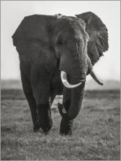 Plakat Portrait of an elephant