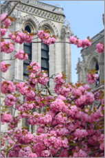 Plakat Cherry blossoms in front of Notre Dame