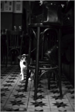 Plakat French bistro with a small dog