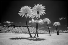 Obraz na płótnie  Infrared palm trees - Peter Hawkins