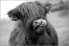 Obraz na drewnie  Highland Cattle schwarz-weiß - John Short