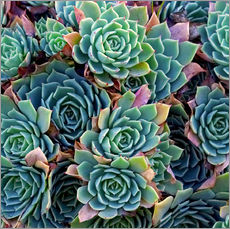 Naklejka na ścianę  Colorful succulents - David Wall