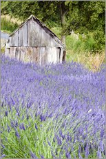 Gallery print  Lavender field and scales - Janell Davidson