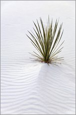 Gallery print  Yucca on sand dune - Don Grall