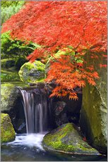 Gallery print  Waterfall and Japanese Maple - Don Paulson