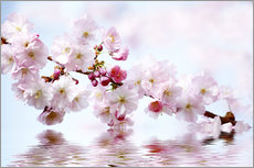 Gallery print  Cherry blossoms - Renate Knapp
