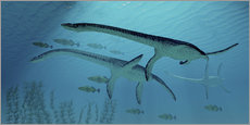 Gallery print  Three Plesiosaurus dinosaurs migrate with a school of fish. - Corey Ford