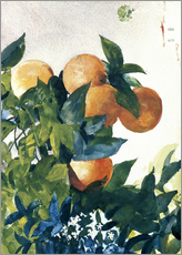 Gallery print  Oranges on a Branch - Winslow Homer