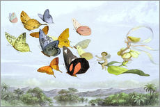 Gallery print  The Fairy Queen's carriage - Richard Doyle
