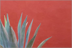 Gallery print  Agave in front of red wall - Don Paulson