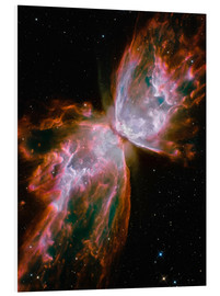 Obraz na PCV  The Butterfly Nebula