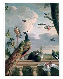 Plakat  Palace of Amsterdam with exotic birds - Melchior de Hondecoeter