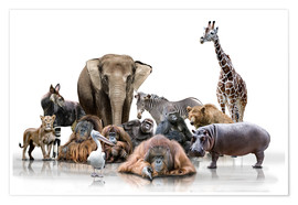 Plakat wild animals