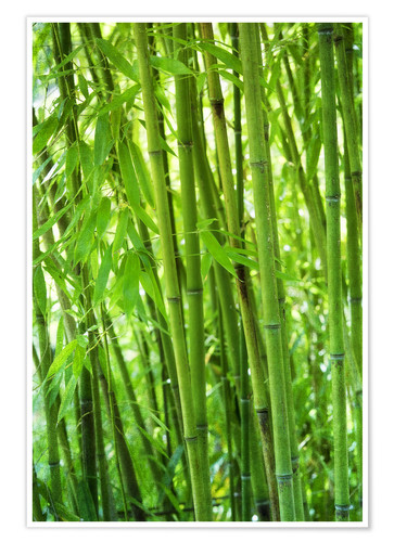 Plakat Bamboo forest