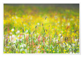 Plakat  Spring Meadow - Suzka