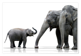 Plakat Elephant Family